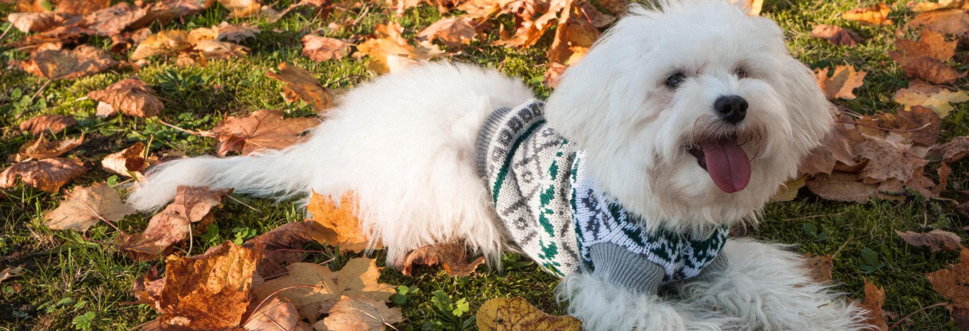 Arthemisclothing – Auch Hunde tragen gerne Wolle