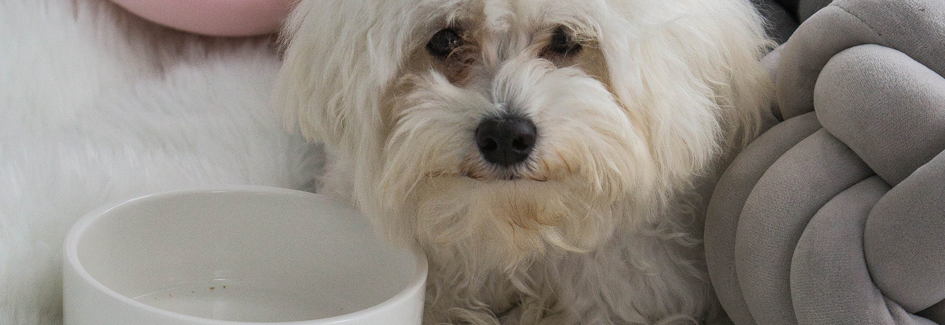 Hundsverliebt-der personalisierte Napf mit dem Namen deines Hundes